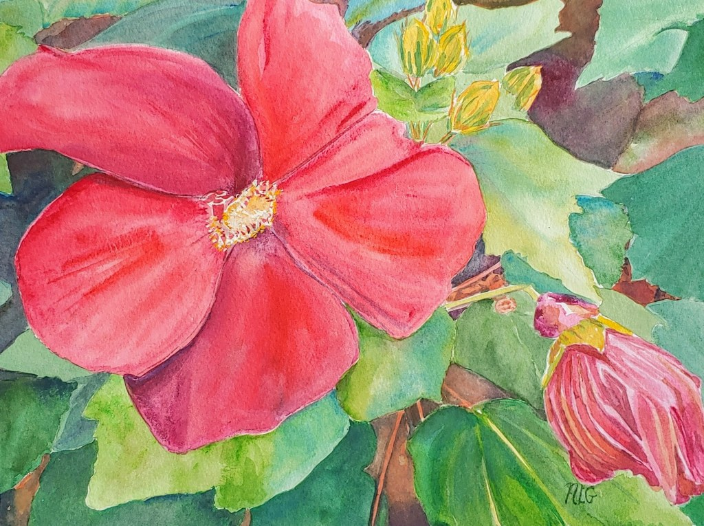 Hibiscus, w/c - available